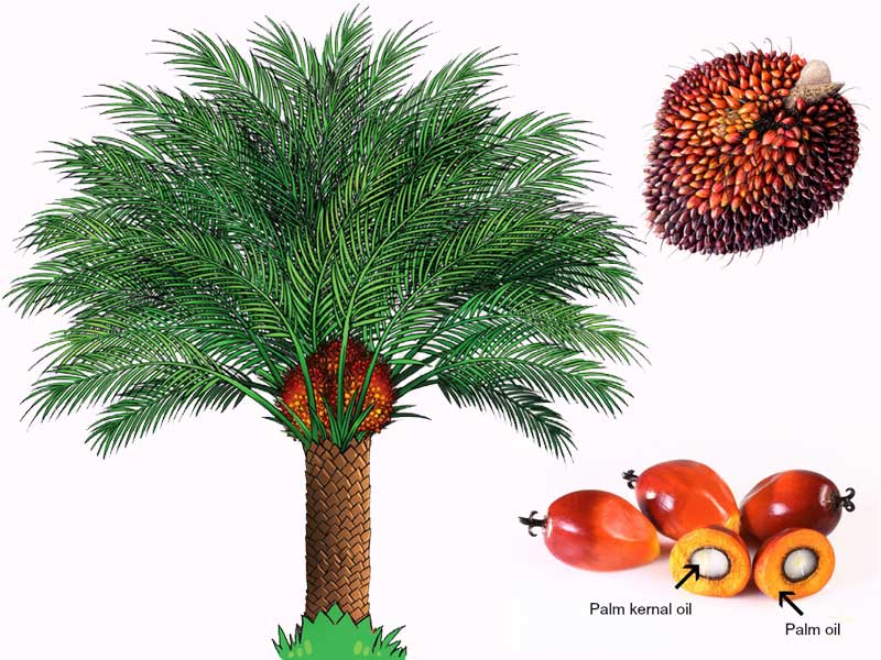Palm Oil Productions